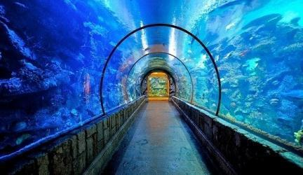 Shark Reef Aquarium Discount Tickets and Promotion Codes