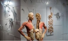 Up to 36% Off Admission Tickets to REAL BODIES at Bally's