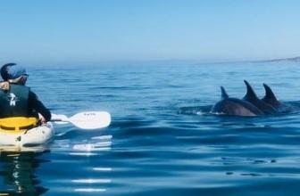Up to 62% Off La Jolla Sea Cave Kayak Tour or Rental