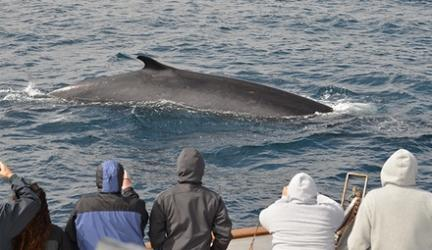 San Diego Whale Watch – Up to 58% Off Tour