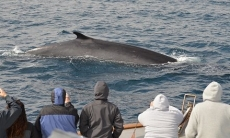San Diego Whale Watch – Up to 57% Off Tour